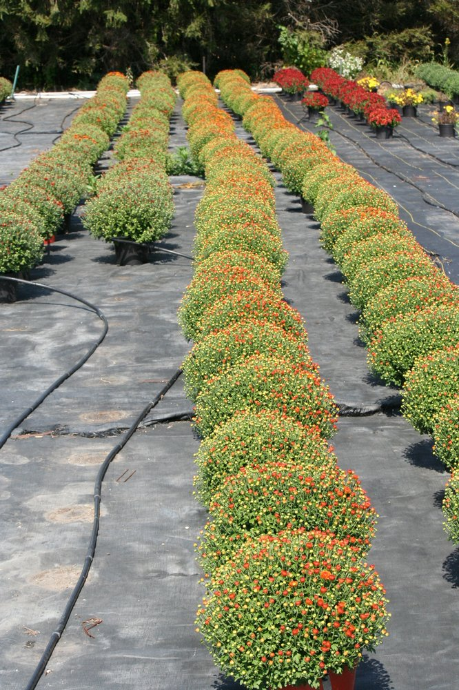 Sunset Growers Greenhouse: 15865 County Line Rd, Minooka, IL