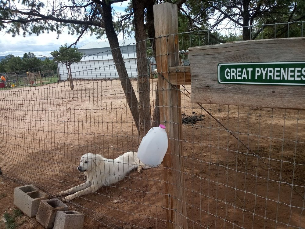 High Country Alpaca Ranch: 17 High Country Rd, Fence Lake, NM