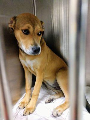 Miami Dade Animal Services