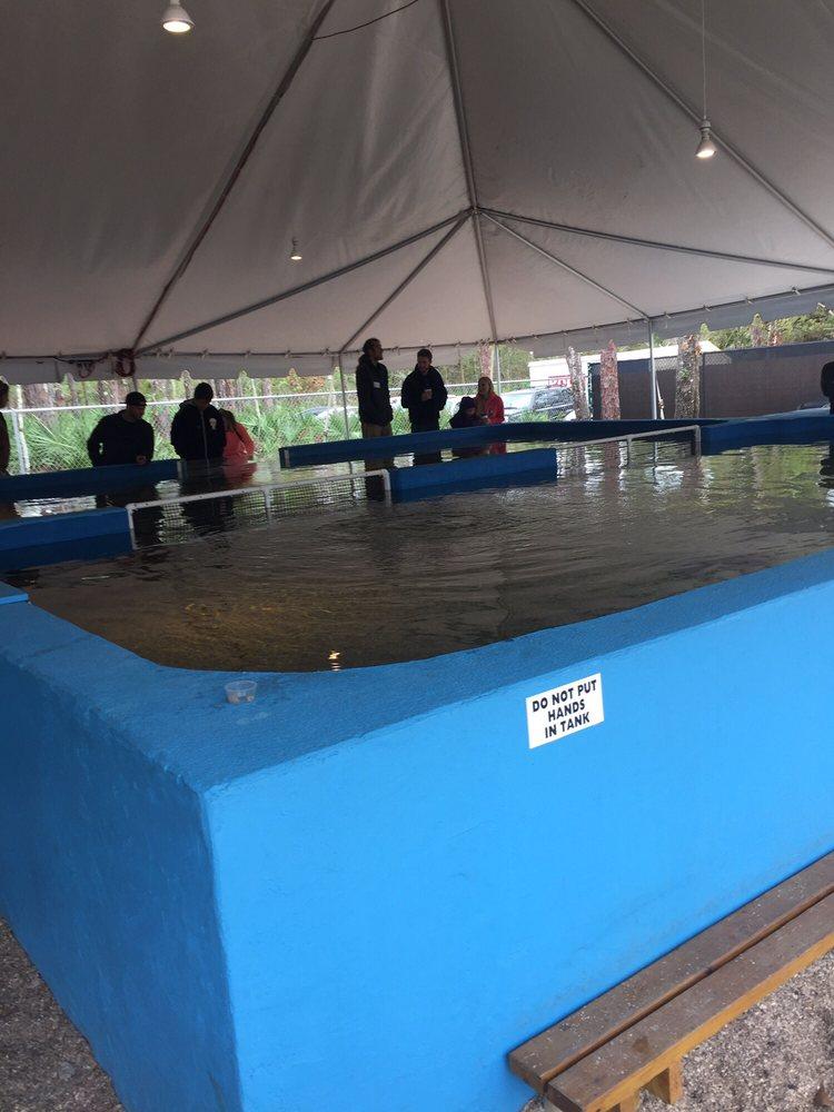 Photos For St Augustine Aquarium Yelp