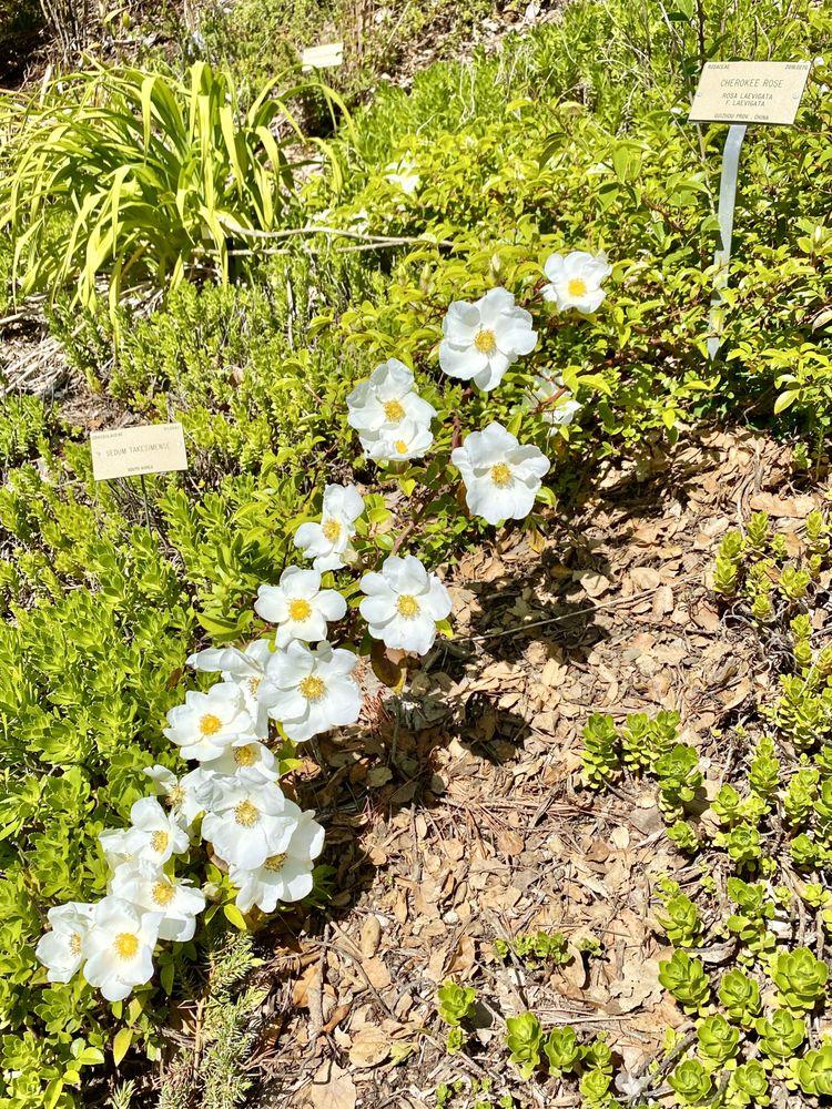 UC Botanical Garden at Berkeley