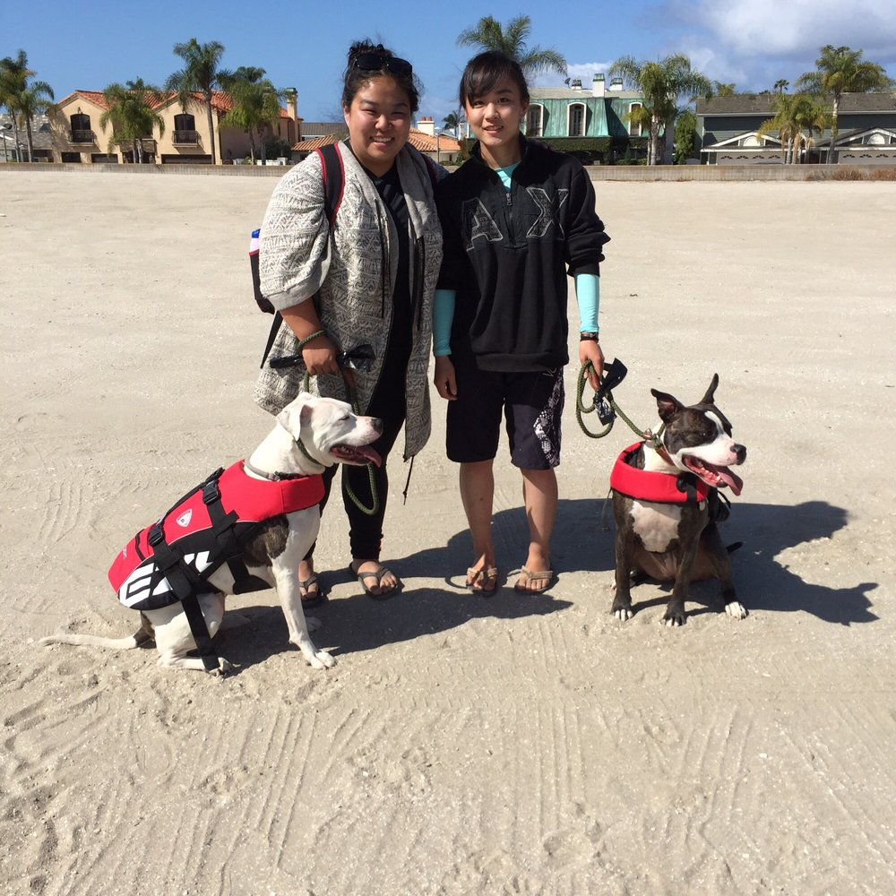 Lucky Dog Boarding Training