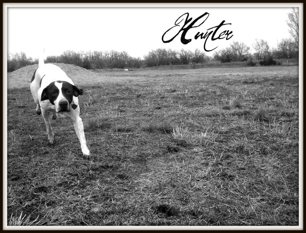 Chisholm Creek Pet Resort: 6260 N Hillside St, Wichita, KS