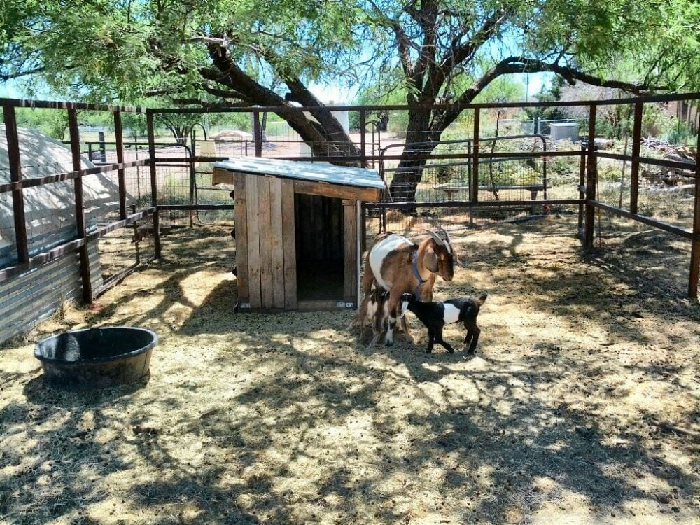 Walking J Farm: 10461 Arivaca Rd, Amado, AZ