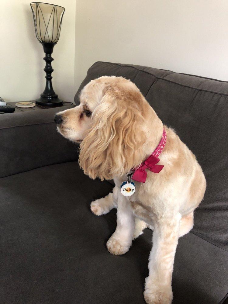 Happy Pets Salon & Spaw: 224 Oneil Ct, Columbia, SC