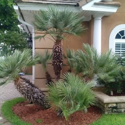 Beautiful Photo Of AAA Palm Trees Plus   Destin, FL, United States. These Are