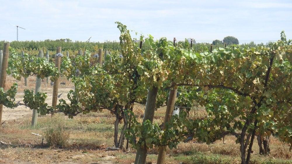 Horizon's Edge Winery
