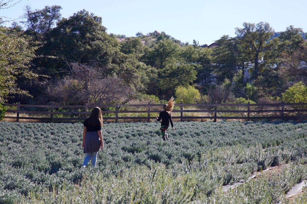 Life Under The Oaks Lavender Farm: 1221 N Rancho Robles Rd, Oracle, AZ