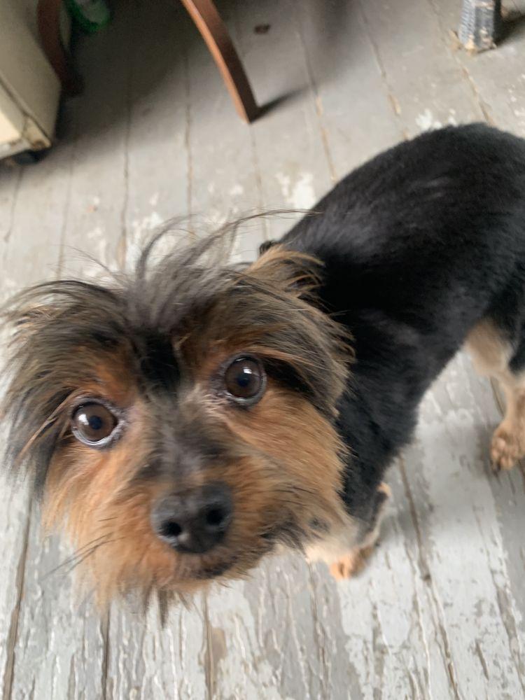 Fur and Away Mobile Pet Grooming: 174 Hollow Rd, Darlington, PA