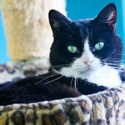The Cattery - Pet Adoption - 8201 Weber, Corpus Christi, TX - Phone