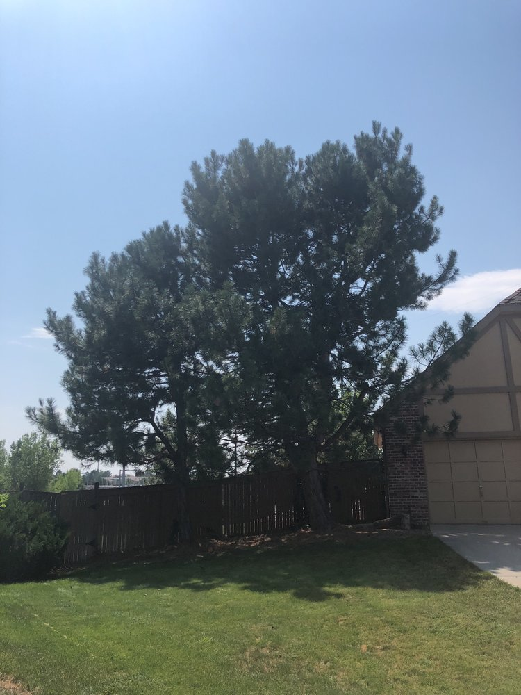 Richis Tree Service - 20 Photos - Tree Services - Southeast