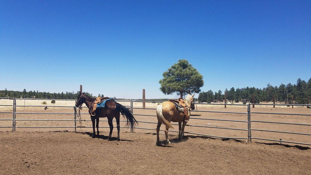 Spencers Rocken Horses: 2550 South Rd, Heber, AZ