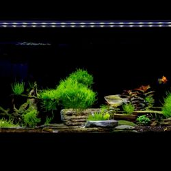 Ocean Design Aquarium - 10 Photos & 38 Reviews - Local Fish Stores ...