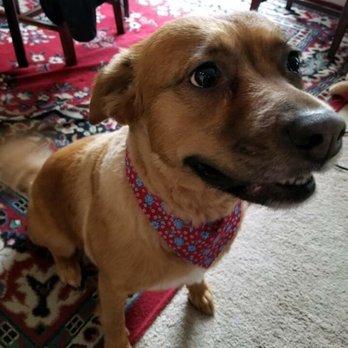 Dog Rescue Salisbury Md