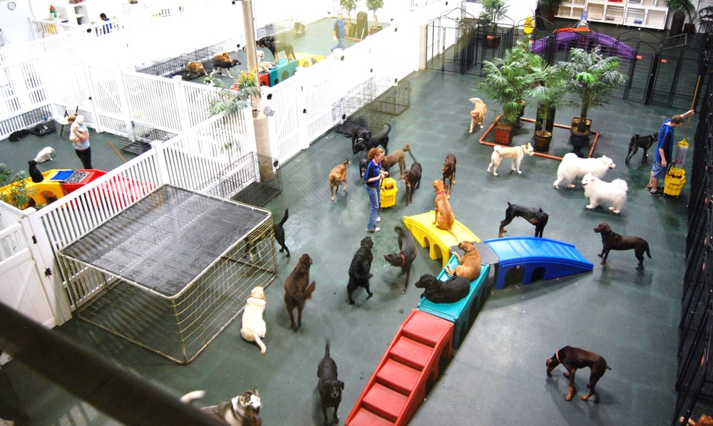 A Dog's Day Out: 44642 Guilford Dr, Ashburn, VA