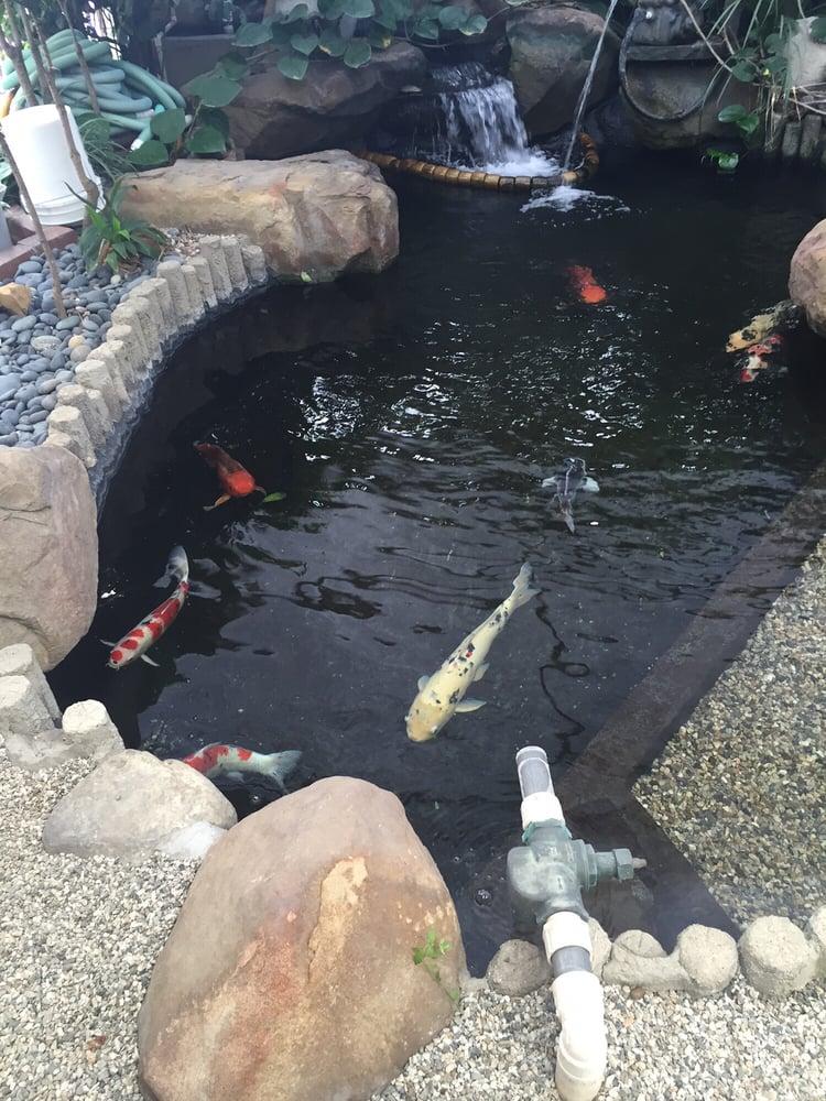 Asahi Fancy Koi 44 Photos 16 Reviews Pet Stores