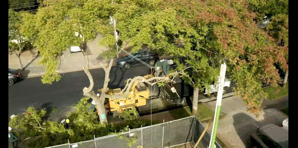 Skyview Tree Service: Los Gatos, CA