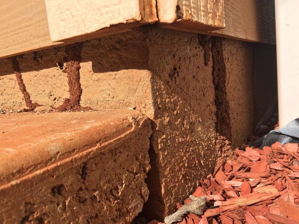 Termites in Hawaii