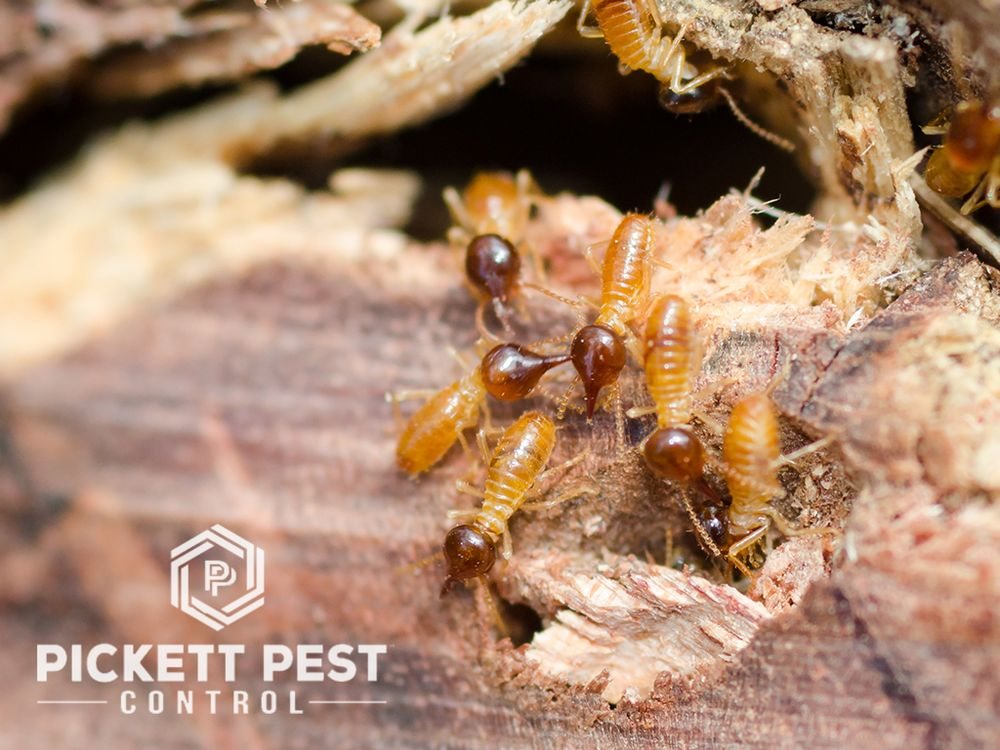 Pickett Pest Control St. George: 826 N 370th W, La Verkin, UT