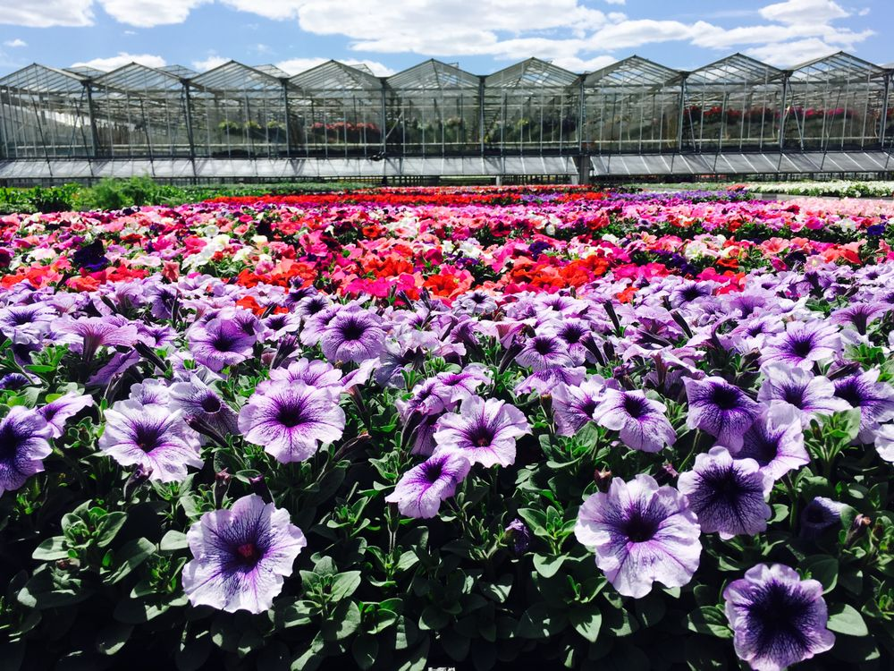 Lehigh Valley Home & Garden Center: 4220 Crackersport Rd, Allentown, PA