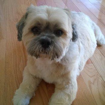 Lucky Dog Grooming Manassas Reviews