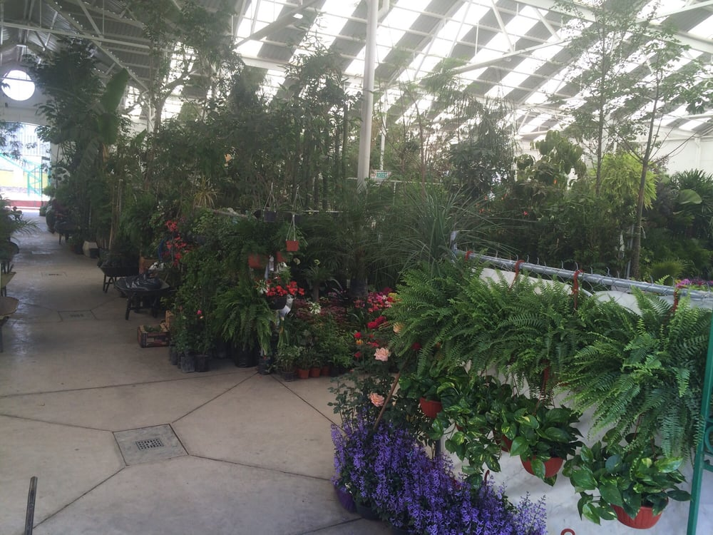 Mercado da las flores viveros y jardiner a de las for Viveros en queretaro