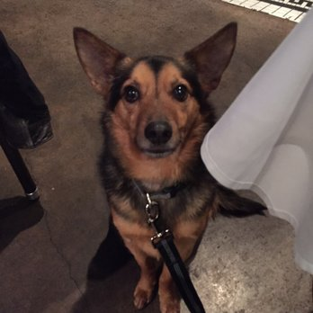 Dog Friendly Restaurant Fremont Ca