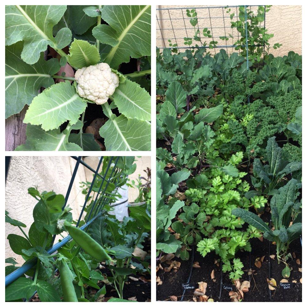Niche Organic Gardens