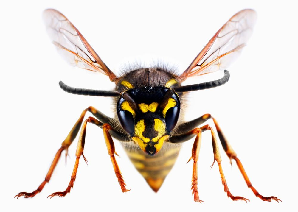 Amity Pest Control: Sterling, NY