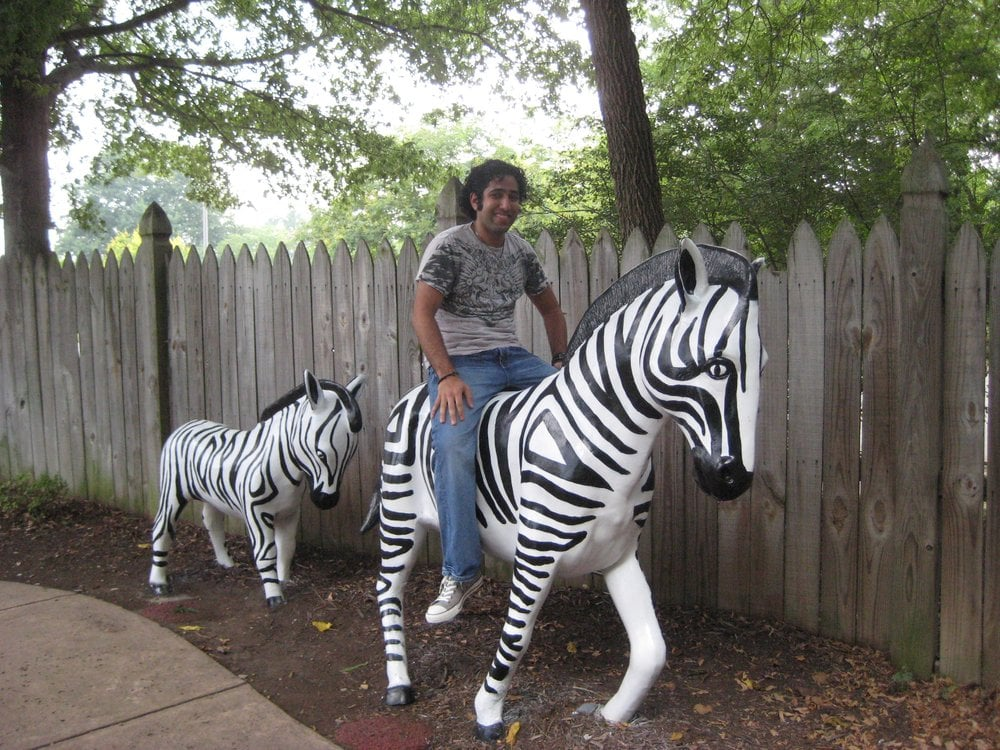 Two zebra friends at the golf course Yelp