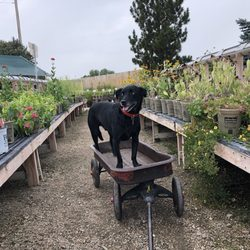 Photo Of Fort Collins Nursery Co United States Dog Friendly