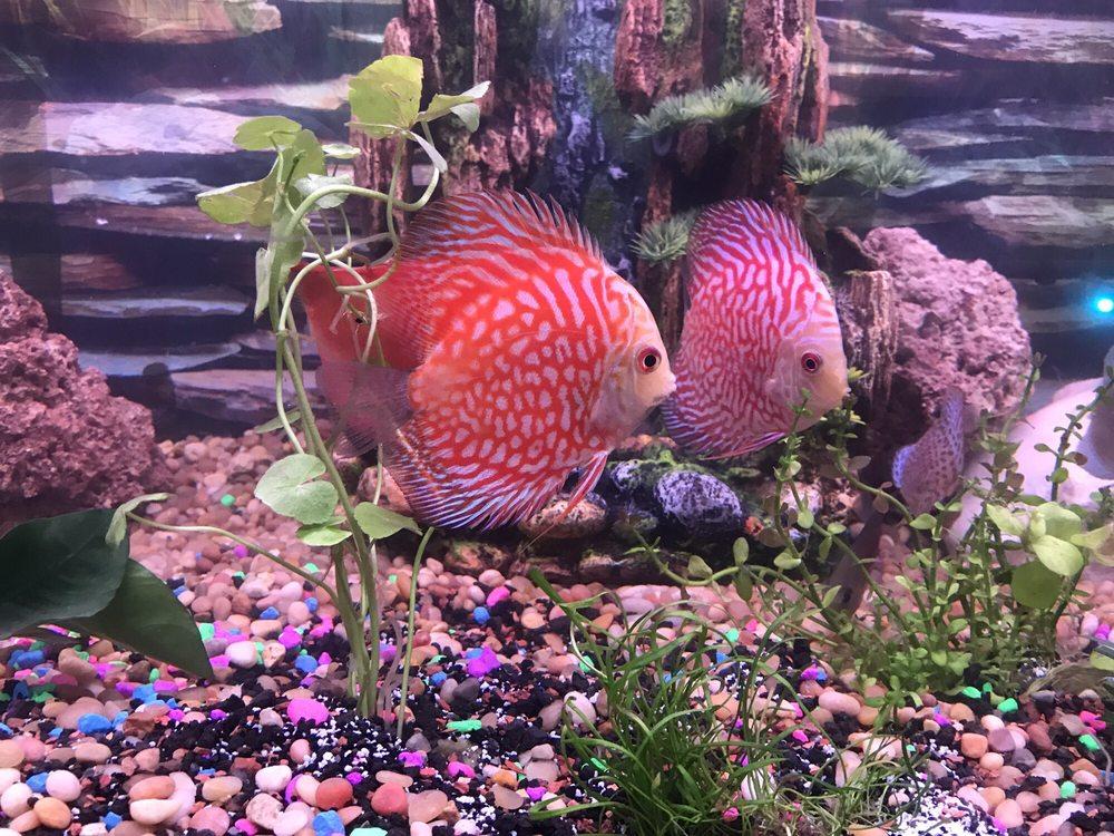 Nemo Aquarium
