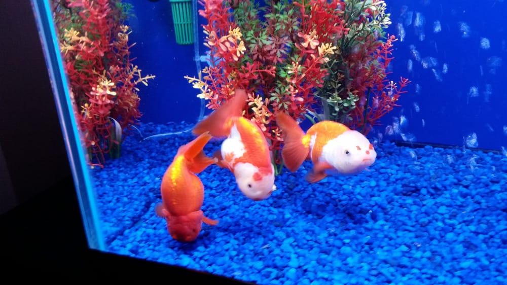 Kissena Aquarium: 4630 Kissena Blvd, Flushing, NY