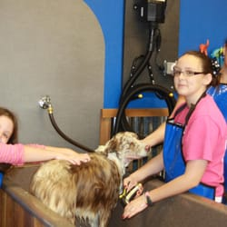 Dog Grooming Fort Worth Tx