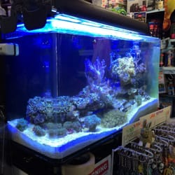 Best freshwater tropical fish stores in manhattan a yelp for Exotic fish stores near me