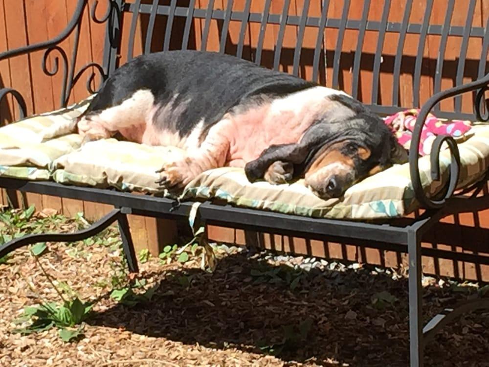 Puppy Paws: 297 Main St, Cornwall, NY