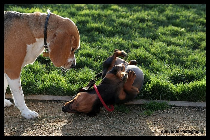 Raymond G Gamma Dog Park