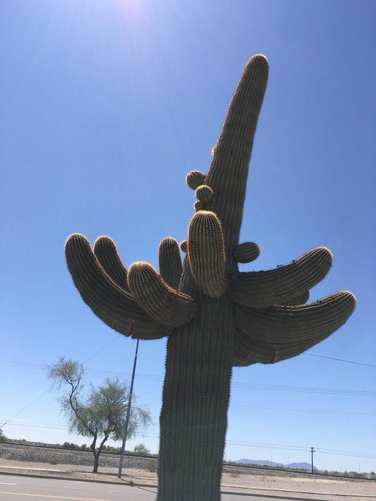 Sonoran Desert National Monument: 21605 N 7th Ave, Phoenix, AZ