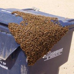 Bees review beach house teen teen xxx www