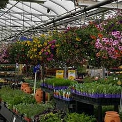 stauffers of kissel hill garden center hours garden ftempo