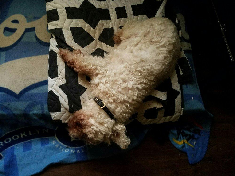 A Brand New Dog, mobile grooming: Glendora, CA