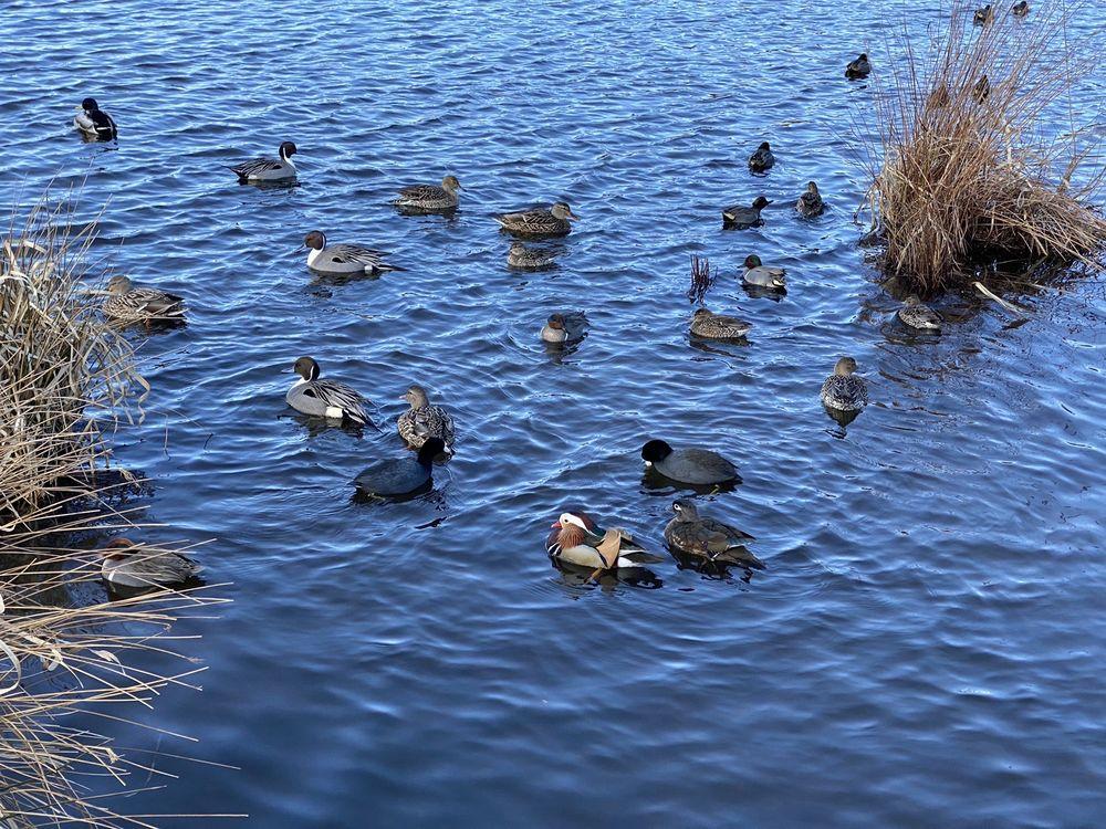 Burnaby Lake Regional Nature Park
