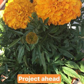 Armstrong Garden Centers 44 Photos 62 Reviews Gardening Centres 1364 Morena Blvd Bay