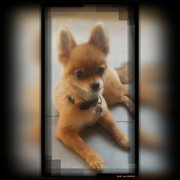 You dirty dog 19 photos 19 reviews pet groomers 44770 san uptown dog grooming solutioingenieria Images