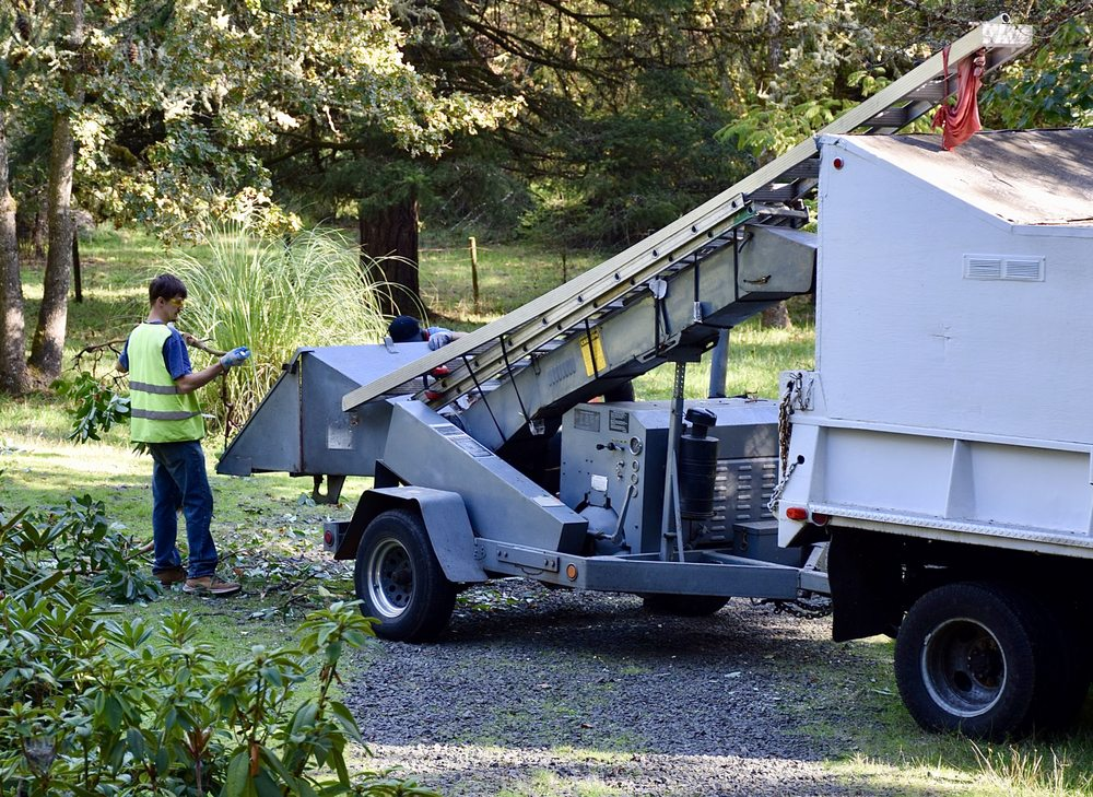 Albright's Tree Service: 630 Dempsey St, Harrisburg, OR