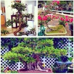 Photo Of Dragon Garden Nurseries Waimo Hi United States My Sad Little