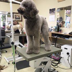 Happy dog grooming salon 19 photos 28 reviews pet groomers photo of happy dog grooming salon huntington beach ca united states dante solutioingenieria Gallery
