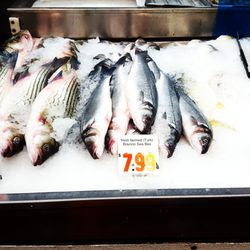 Sun Fat Seafood Company