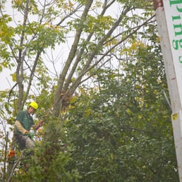 Ping S Tree Service Tree Services 5050 Freyn Dr