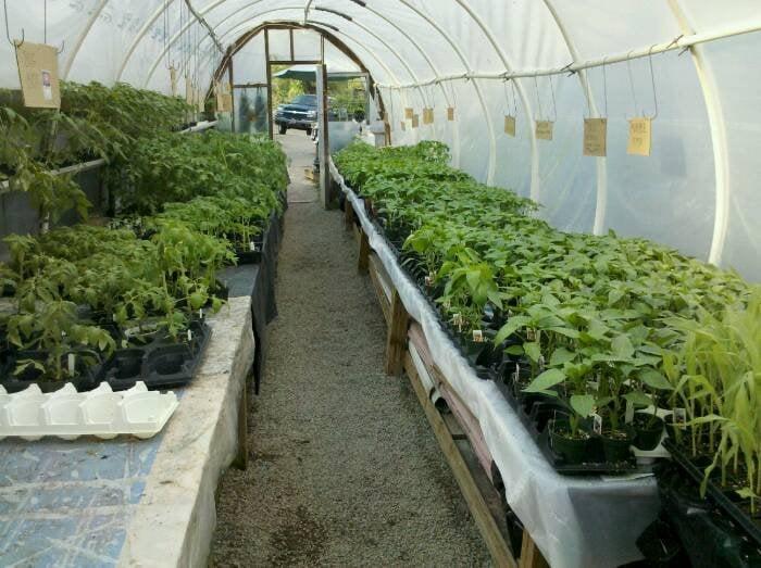 Henkel's Greenhouse: 591 Negley Ave, Turtle Creek, PA